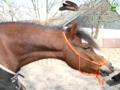Oranje Touwhalster