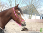 Roze Touwhalster_4