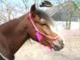 Roze Veer hanger_4